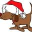 Christmas Pet Adoption Event!